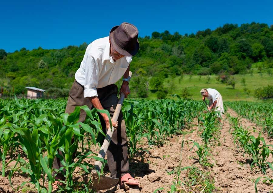 Aposentadoria Rural Trabalhador