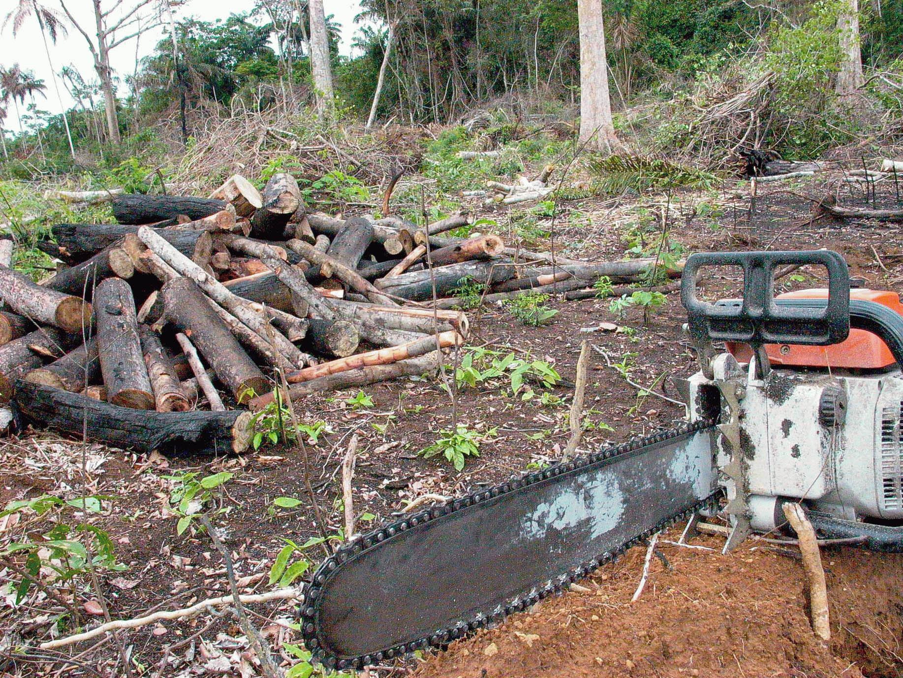 Crimes Ambientais: Fuga Do Local Do Desmatamento Não Caracteriza Crime De Obstrução à Fiscalização Do Ibama