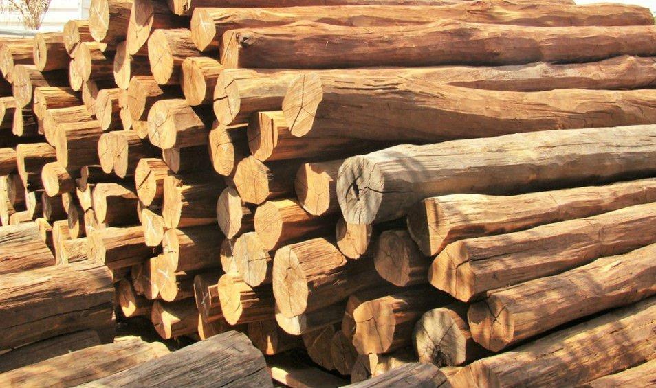 Infração Administrativa Ambiental: TRF4 Mantém Multa A Comerciante Que Mantinha Depósito De Madeira Ilegal