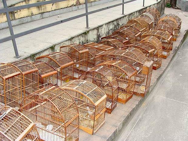 TRF1 Reconhece Direito De Conversão De Infração Administrativa Em Prestação De Serviços Para Idoso Multado Por Manter Pássaros Silvestres Em Cativeiro